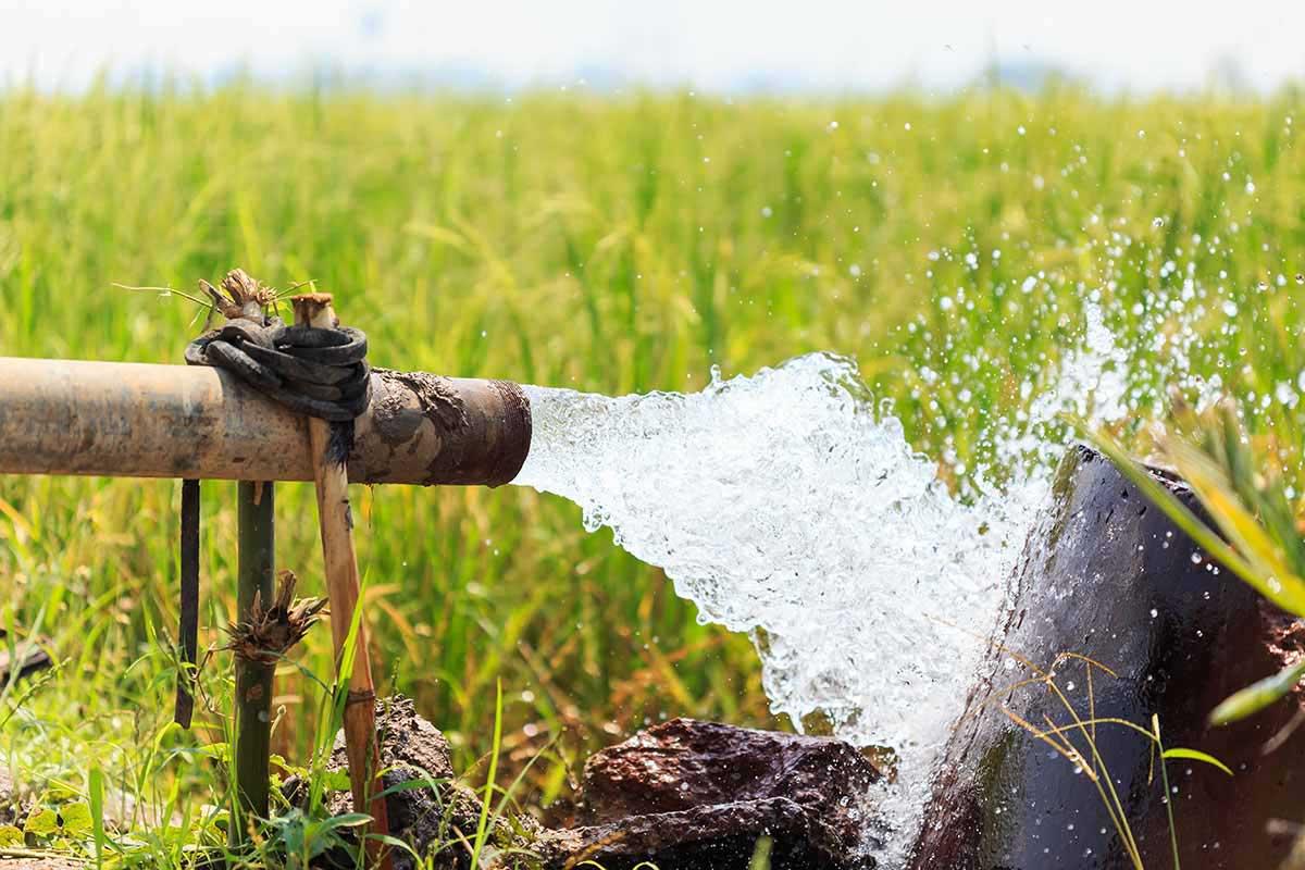 משאבה טבולה
